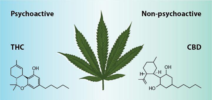 THC และ CBD แตกต่างกันอย่างไร