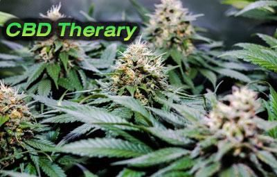 CBD-Therary