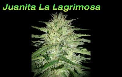 Juanita-La-Lagrimosa