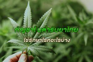 กัญชาในตำรับยาไทย ใช้รักษาโรคอะไรบ้าง