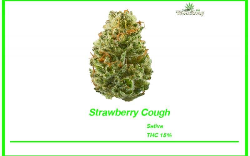 สายพันธุ์ Strawberry Cough